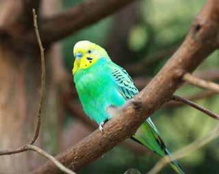 ハンドルネーム bird
