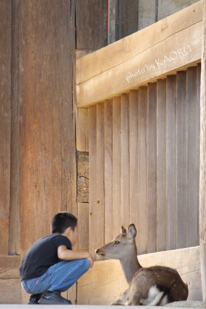 奈良 東大寺 南大門 鹿