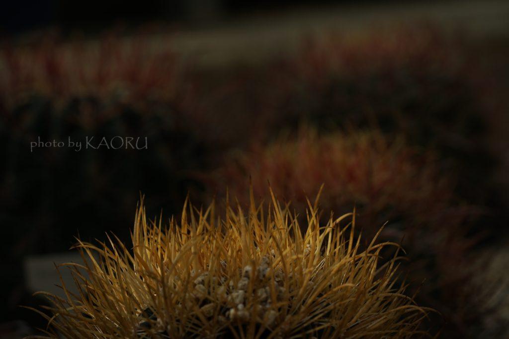 京都府立植物園 マクロレンズ