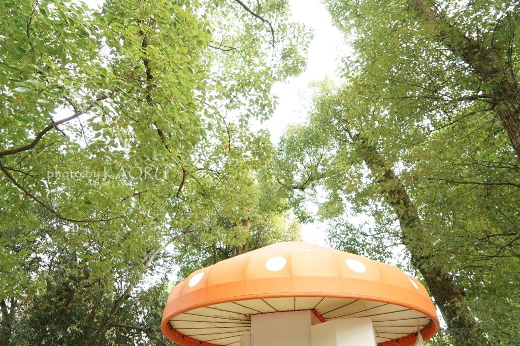 京都府立植物園 きのこ