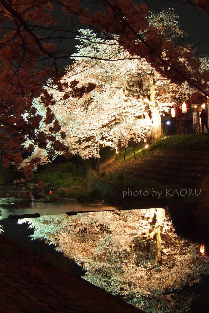 佐保川 桜 ライトアップ