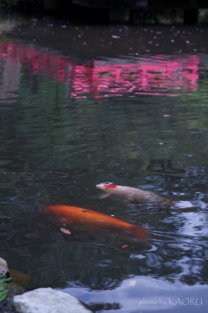 奈良 萬葉植物園