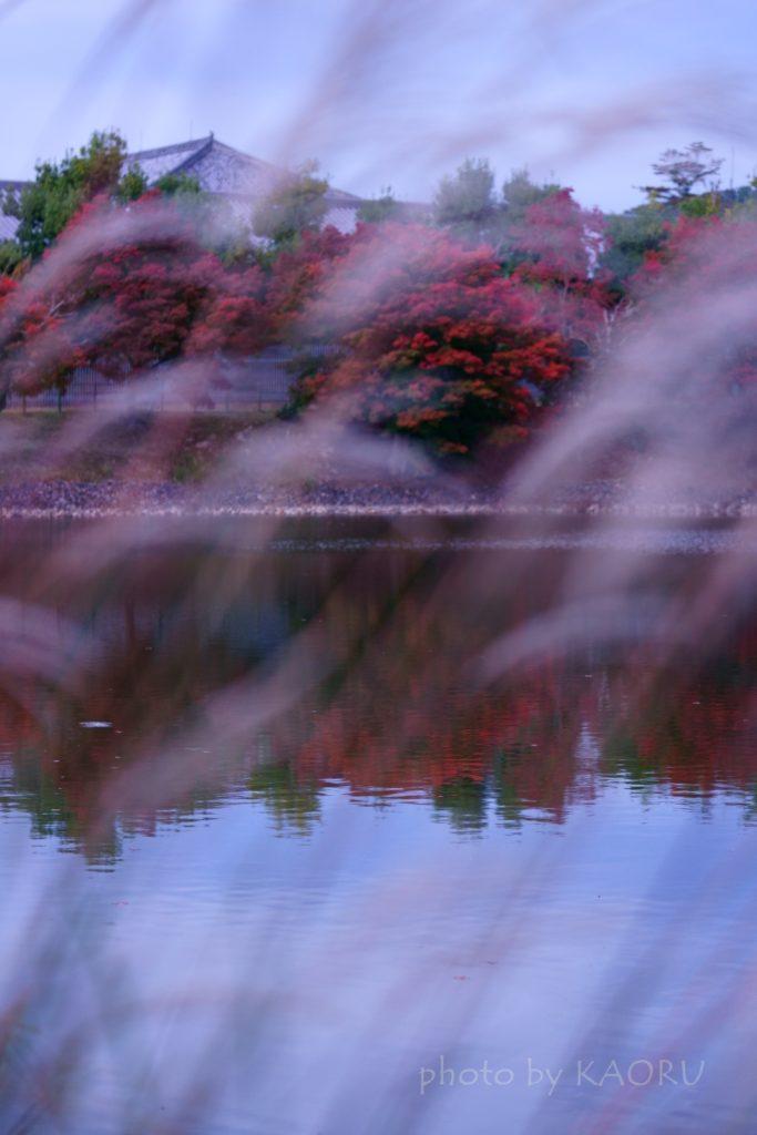 奈良 奈良公園 大仏池 紅葉