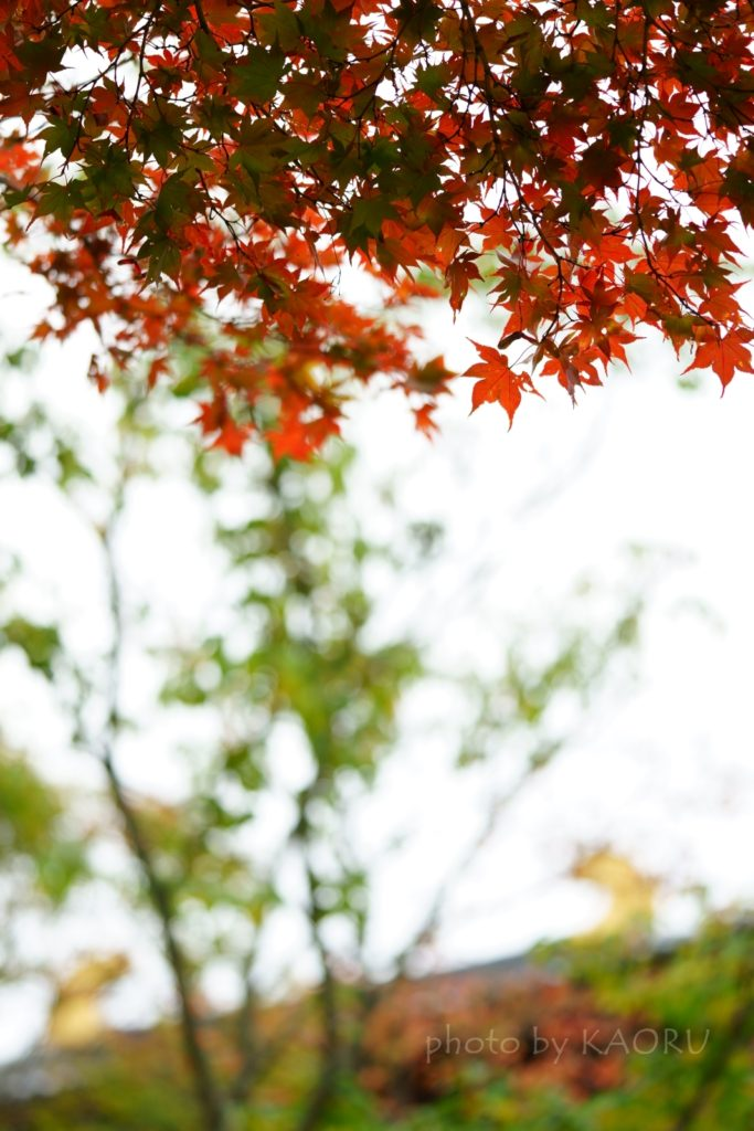 奈良 奈良公園 大仏池 もみじ