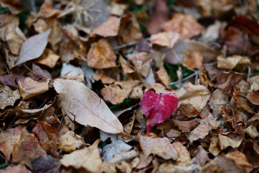 奈良 奈良公園 大仏池 鹿 紅葉