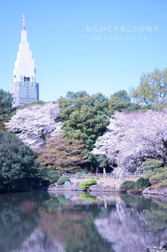 新宿御苑 桜 2020