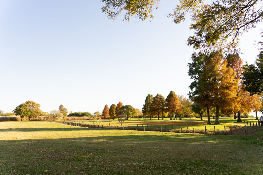 渡良瀬遊水地 公園