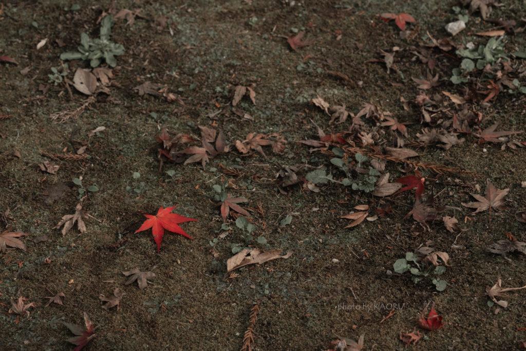 落ち葉 紅葉